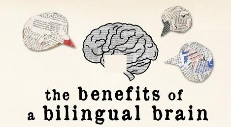 interprète cerveau bilingue